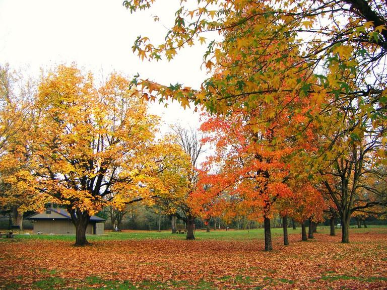 Lewis and Clark State Park   © Sarah McDevitt / Flickr