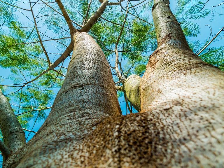 Tree bark CC0 Pixabay
