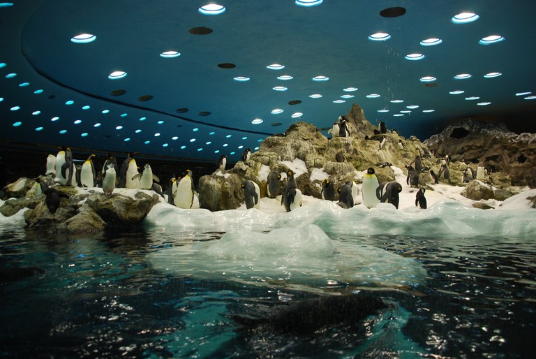 Loro Parque Planet Penguin | © Wladyslaw / Wikimedia Commons