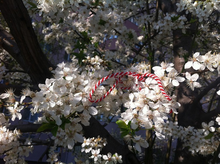 A Martisor in a bloomed tree