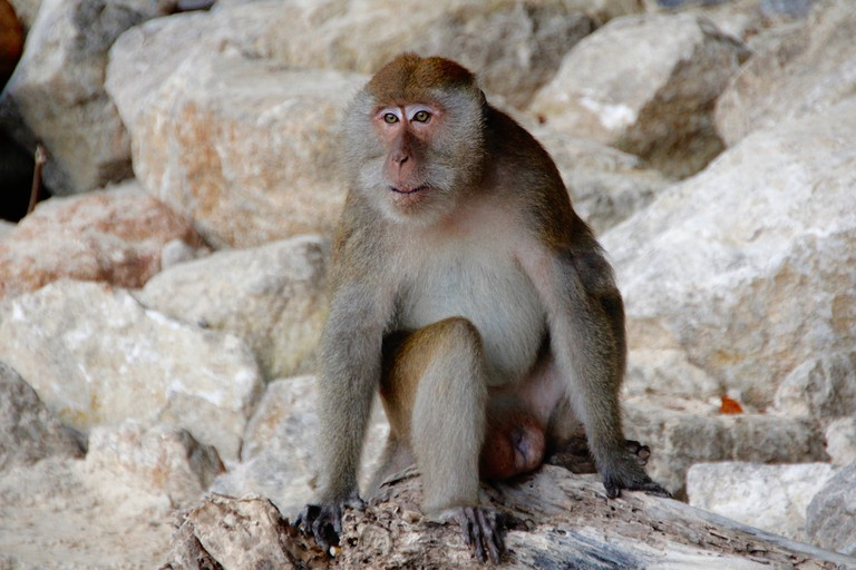 monkey-1201221_1920