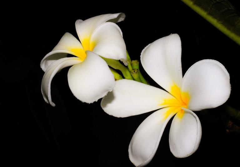 Champ flower