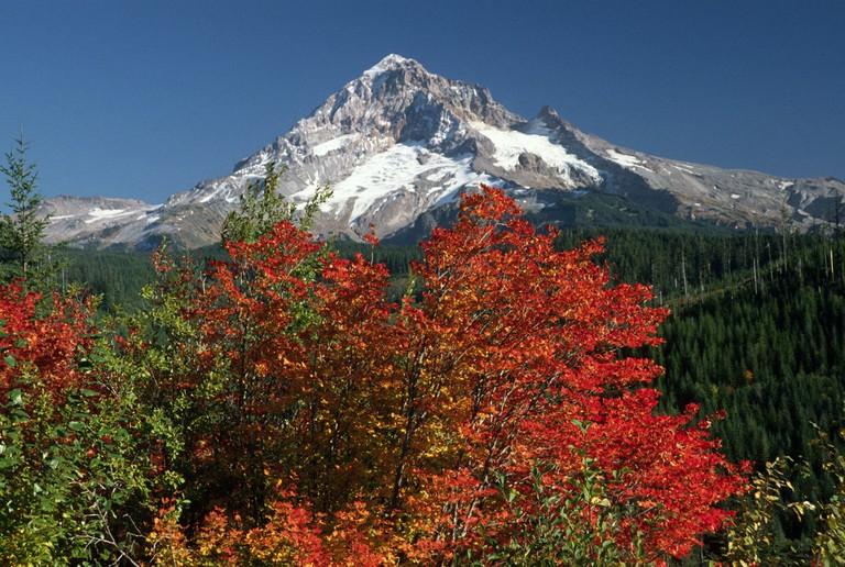Mt. Hood National Forest   © Forest Service / Flickr