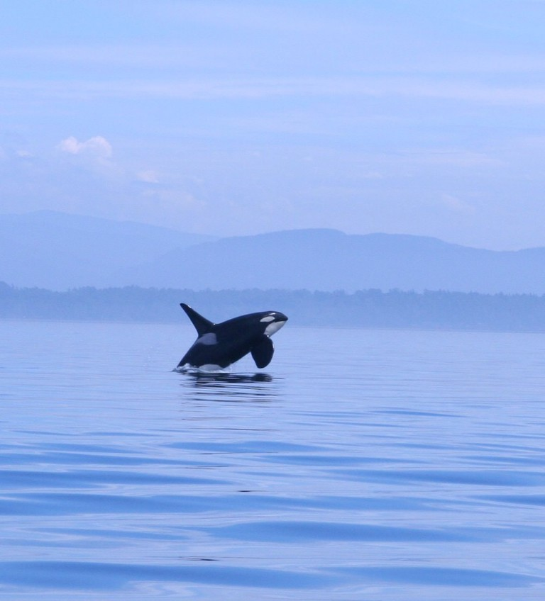 Orca | © Kim / Flickr