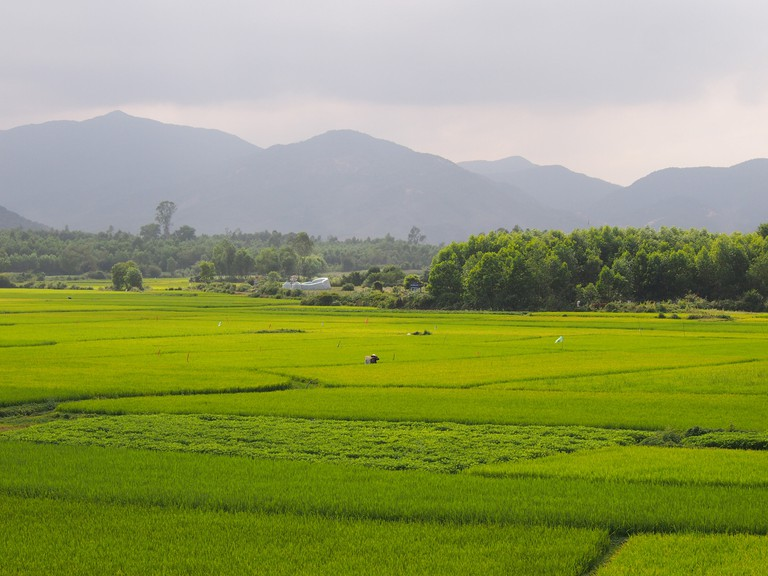 Rice paddies outside Hoi An