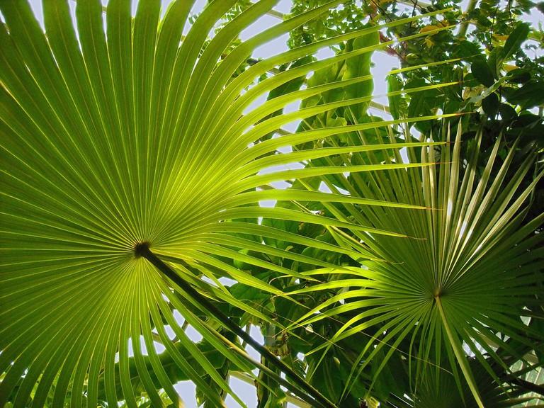 palms gfpos