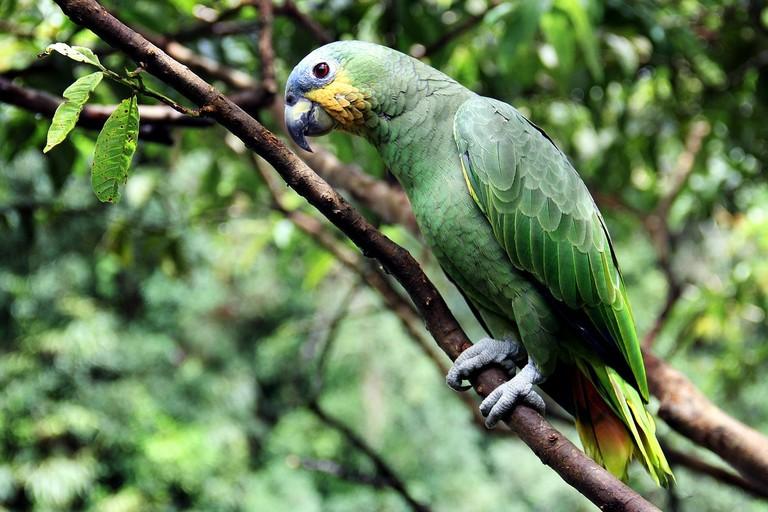 parrot-2756491_1280