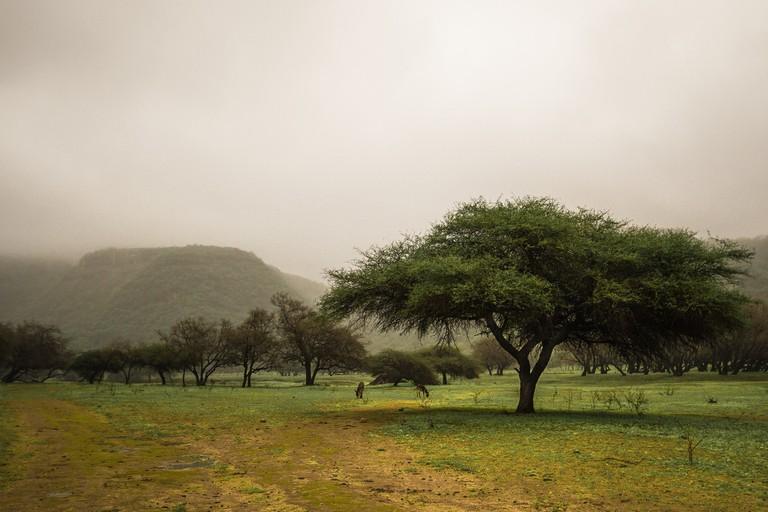 Salalah during the rainy season