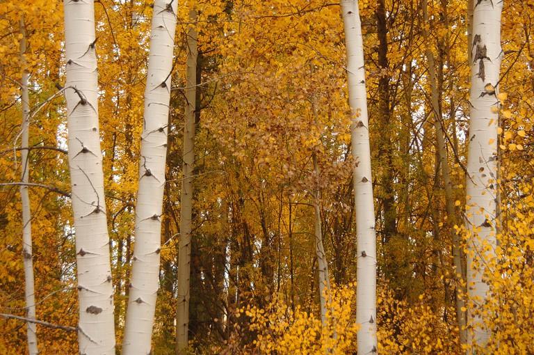 Rocky Point-Fremont Winema   © Forest Service / Flickr