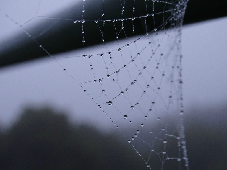 Spider web on a misty morning