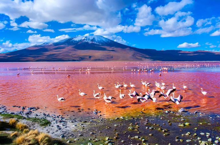Flamingos relax in Laguna Colorada, Uyuni