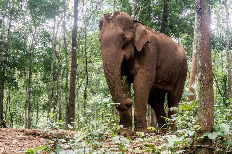 An elephant in Mondulkiri