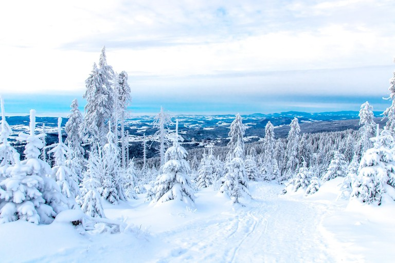 Winterscape in the Bavarian Forest National Park