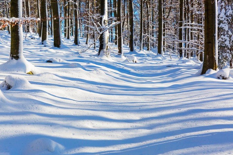 Snow covers the forest in Hainich National Park