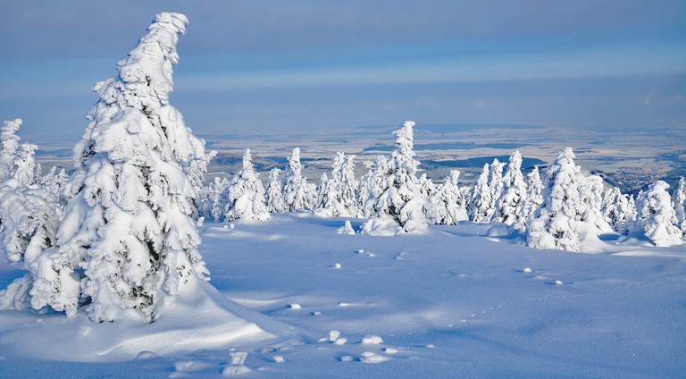 Winter in Harz National Park