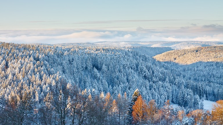 Magical Winter Landscape in the Black Forest National Park