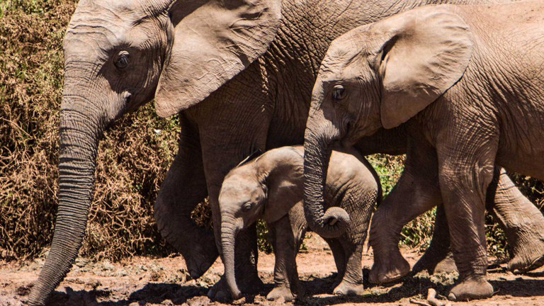 South-African-National-Parks_Addo-Elephant