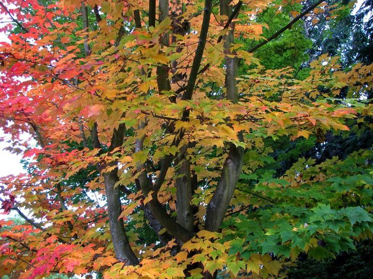 UW Fall Colors   © David Eickhoff / Flickr