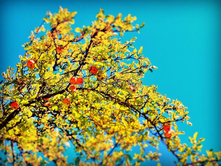 Washington State Orchard   © David Siu / Flickr