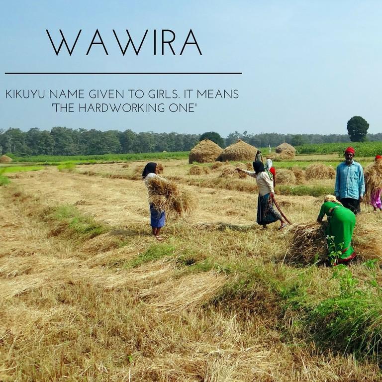 WAWIRA (2)