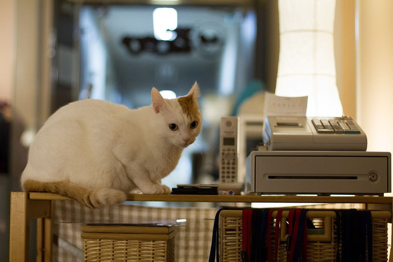 1024px-A_shop_assistant_of_a_cat_cafe_(6887378772)