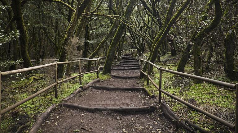 Garajonay National Park | © Diego Delso / Wikimedia Commons