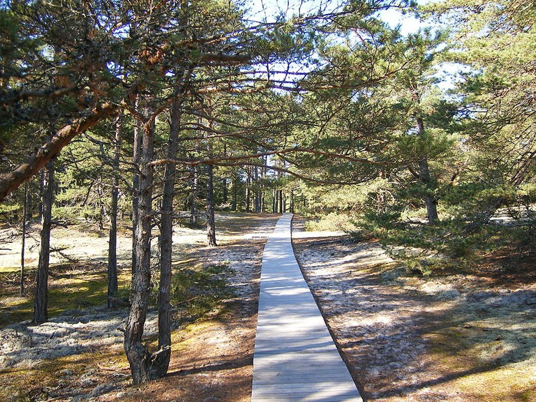 Wooden path through the forest
