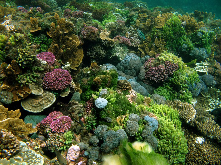 Coral Reef, Erscotts North, Lord Howe Island