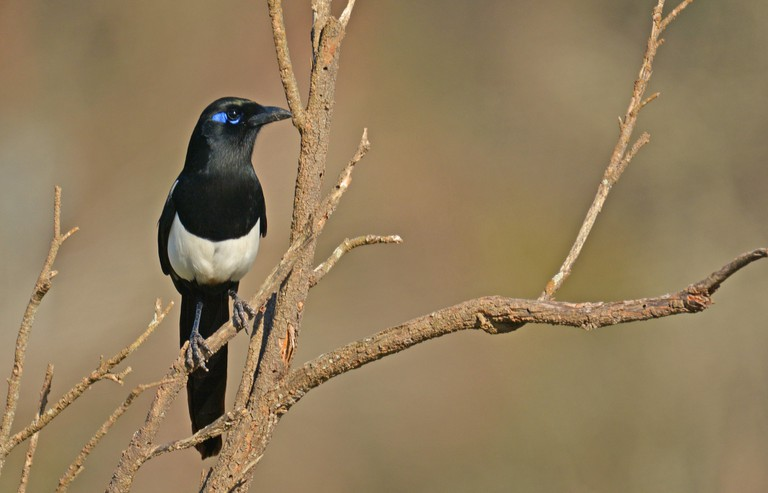 Bird in Morocco