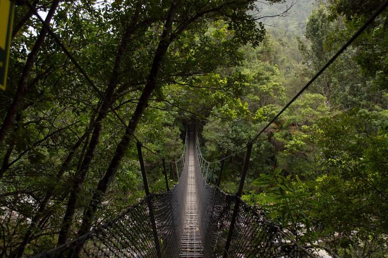 Kauaeranga Kauri Trail Swing Bridge