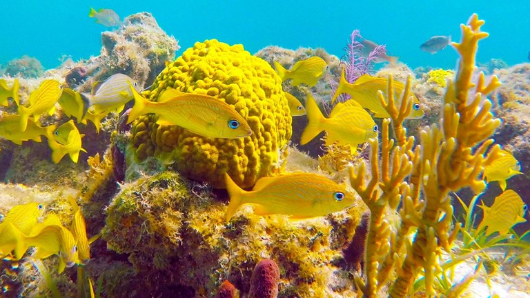 Schools of fish, the Great Barrier Reef