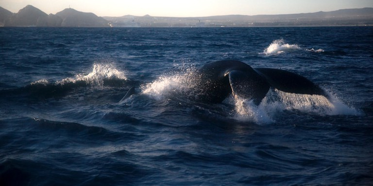 Whale watching │