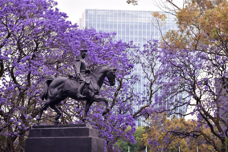 Spring in Mexico City │