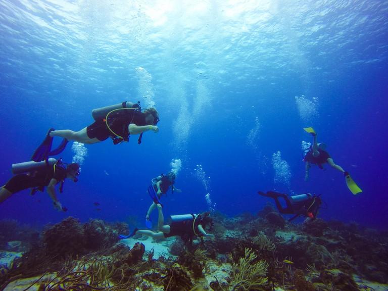 Diving in Chankanaab Reef
