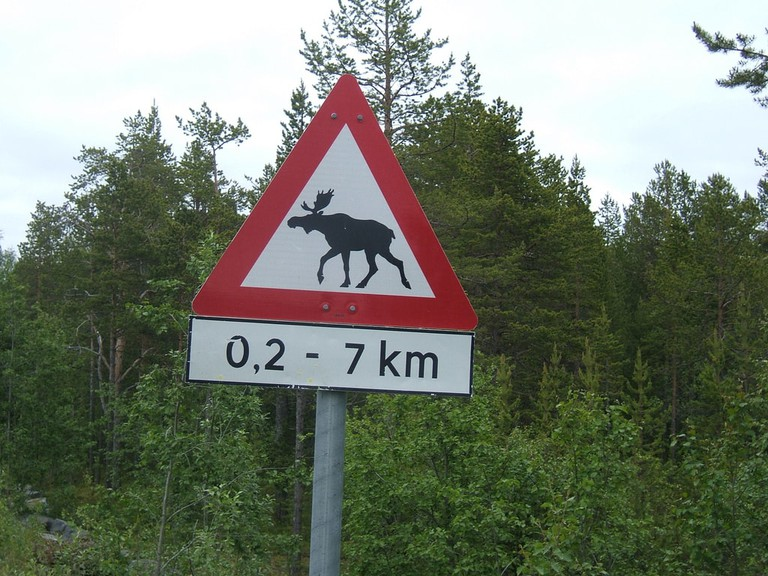Moose, caution