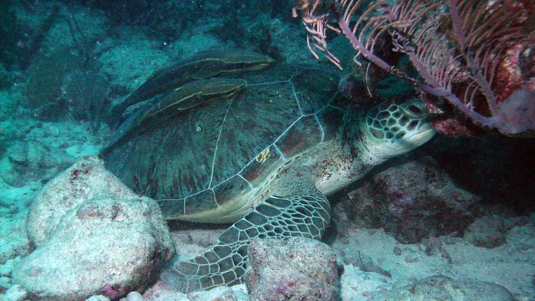 Akumal is a popular spot for sea turtles to hang out
