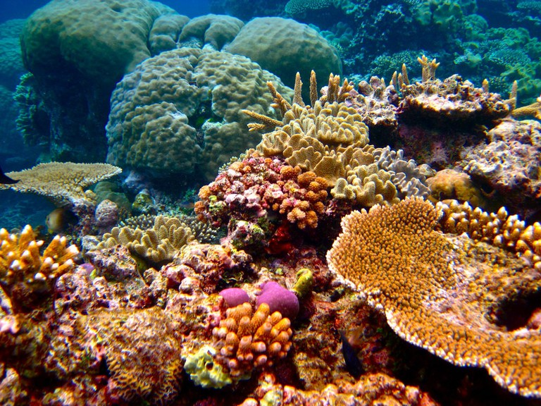 Anemones, the Great Barrier Reef