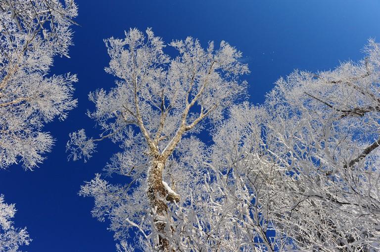 Ice-Rimmed Trees of Jilin