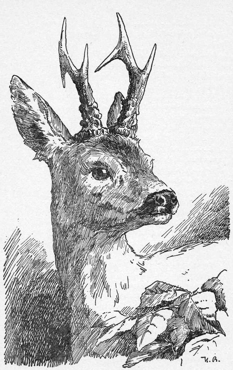 Hans Bertle's 1940 illustration of Bambi