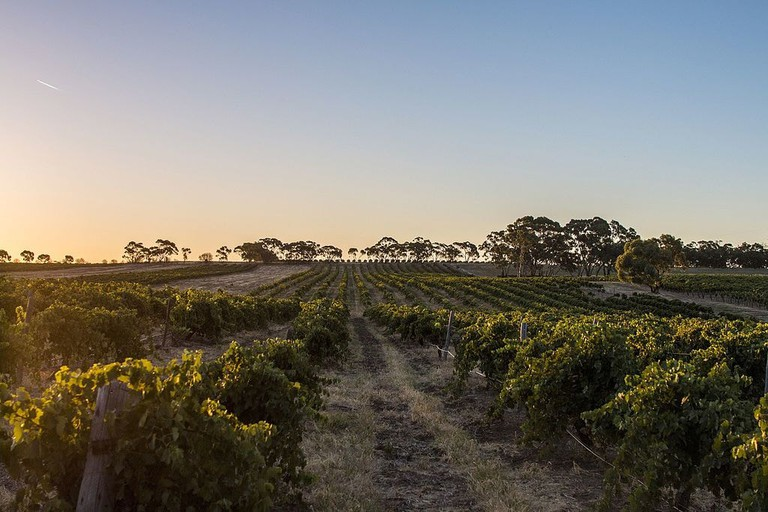 Barossa Valley | © Roumpf_Wikimedia Commons
