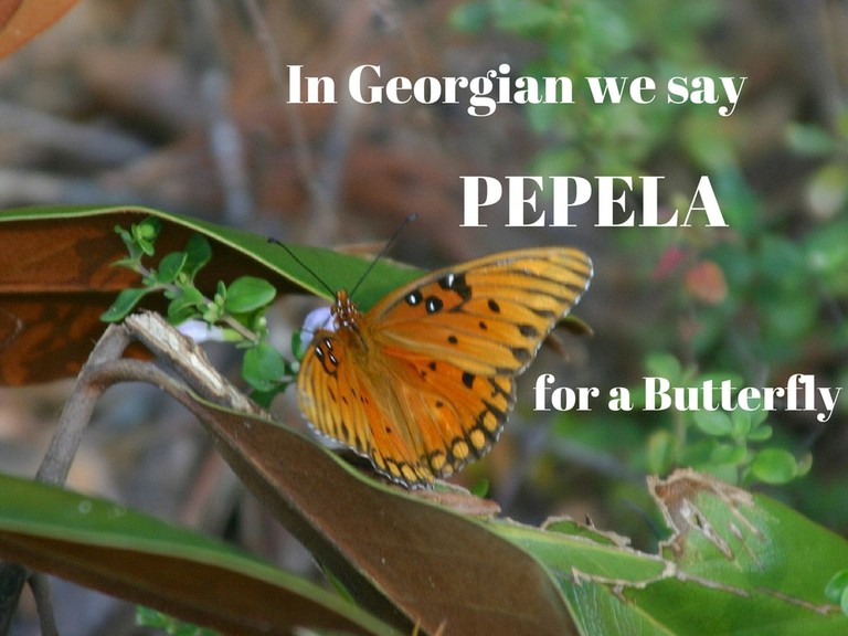 Pepela – Butterfly