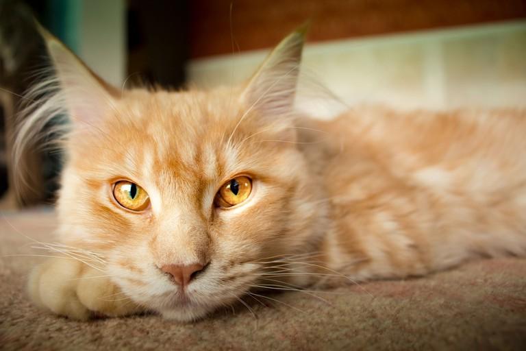 cat-2170548_1280