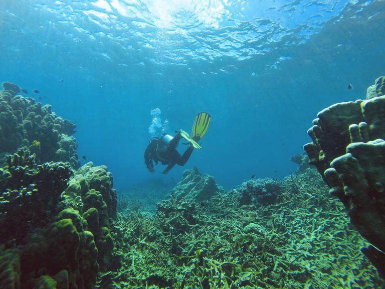 Diving in Salang Bay, Tioman Island