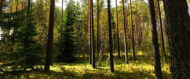 finland-1671569_1920
