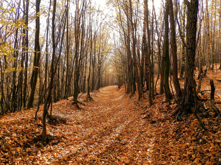 You're sure to see many red, orange, and yellow leaves while hiking in Slovakia in autumn