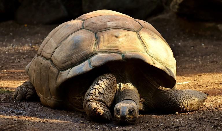 giant-tortoises-2872006_1280