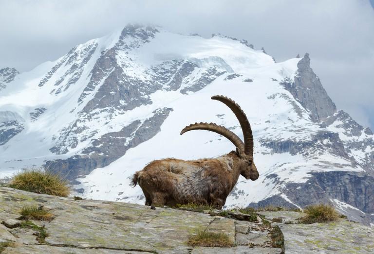 Parco Nazionale Gran Paradiso, Aosta Valley | © Fulvio Spada/Flickr