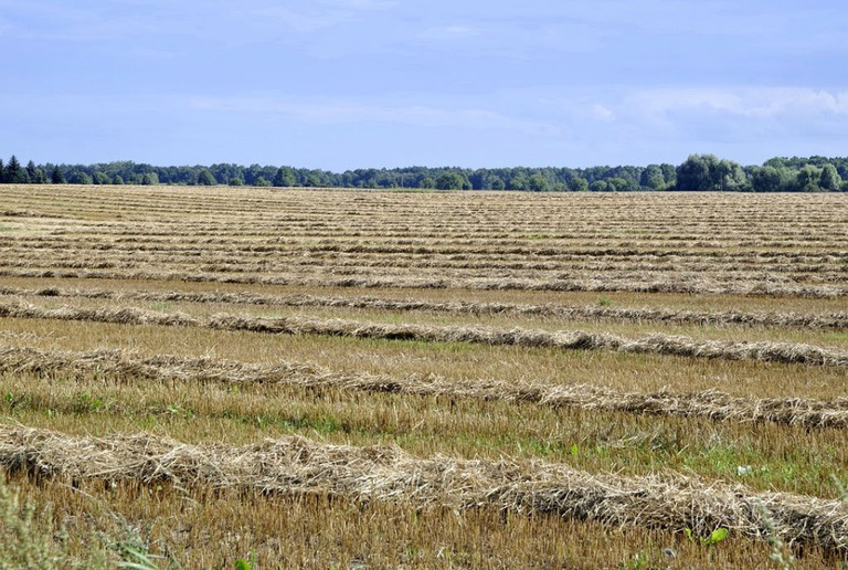 Make hay while the sun shines, Öland /