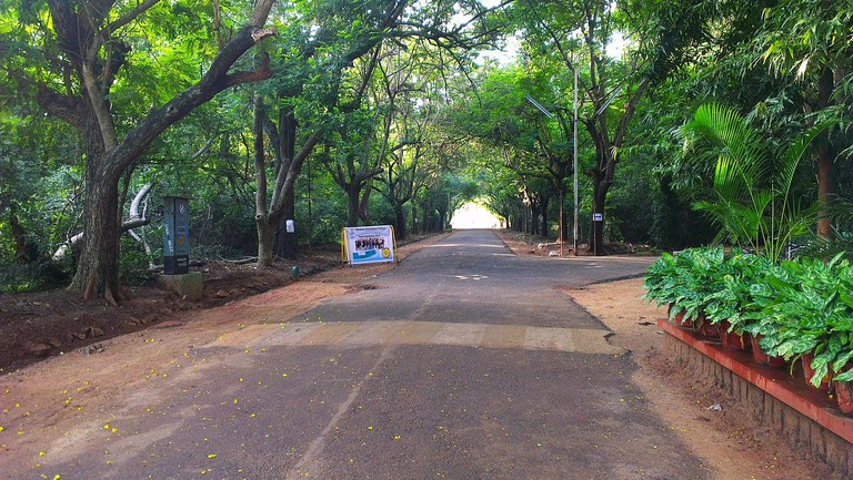 A scenic road inside the Madras Christian College campus in Tambaram, Chennai
