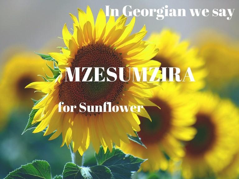 Mzesumzira – Sunflower